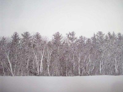 Forest scene pen ink print gene matra pen and ink drawings for Forest scene drawing