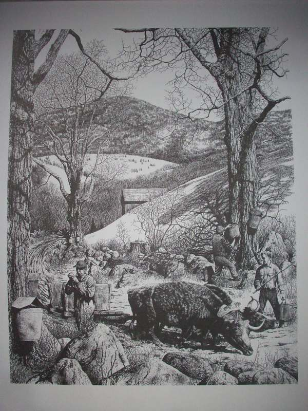 Old Oxen Sapping Pen&Ink Print
