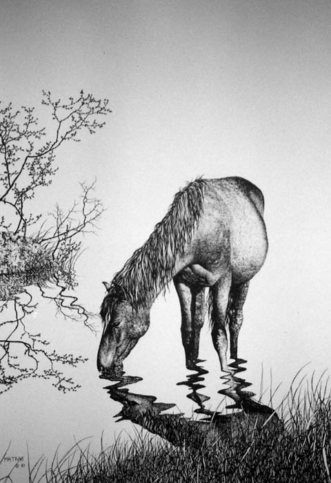 Horse drinking pen ink print