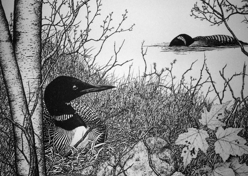 Two Loons Pen & Ink Print